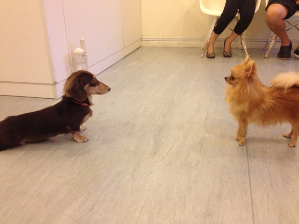 Random Dog Stare-Out