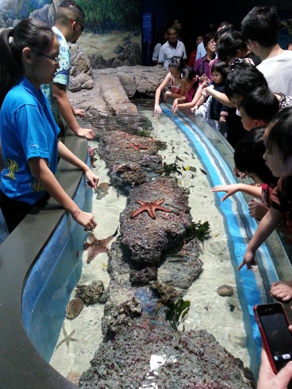 Marine Life Park Starfish