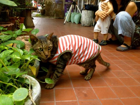 Chico Cat 1