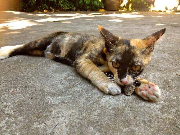 Chico Cat 2