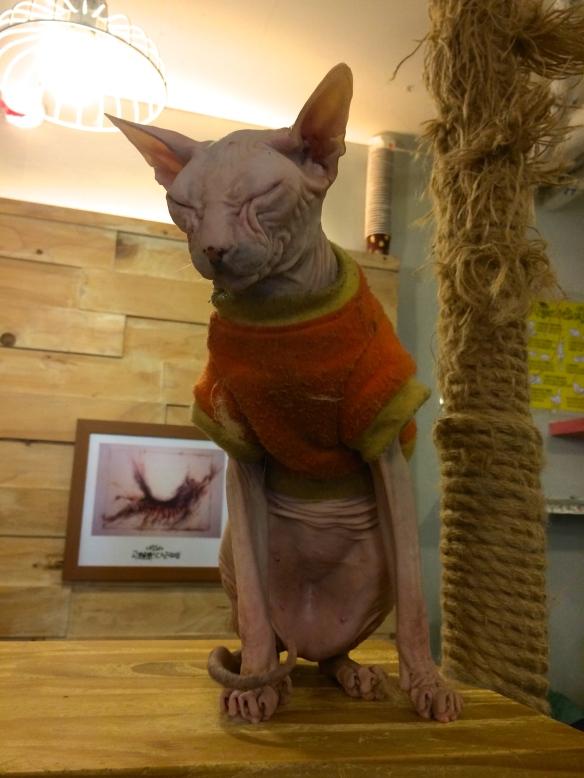 Godabang Sphynx Cat