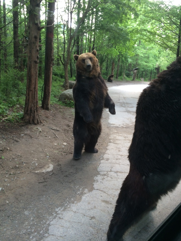 Everland Bear