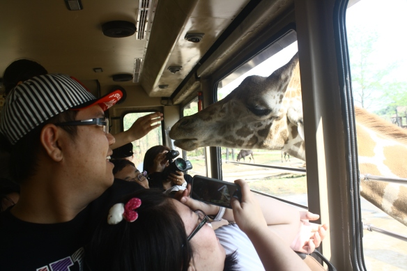 Everland Giraffe
