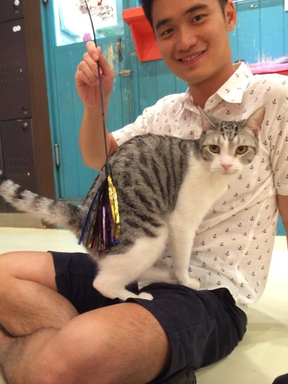 Cat Stick