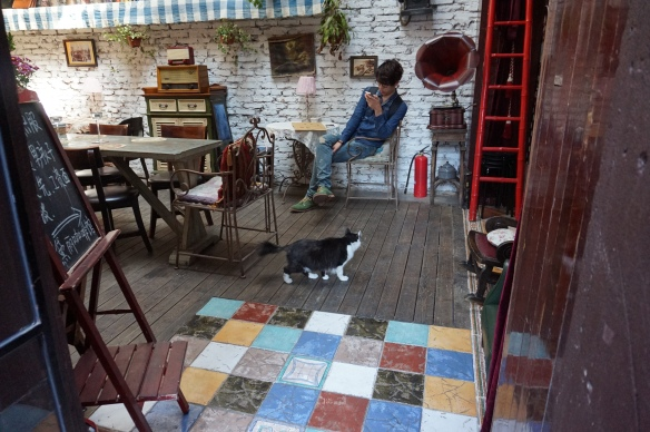 Cafe with Cats